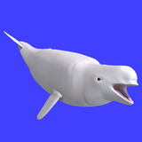 Whitle female beluga whale Royalty Free Stock Images