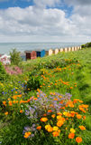 Whitstable beach huts Royalty Free Stock Photo