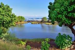 Whittington-Strandpark in der großen Insel von Hawaii Lizenzfreies Stockfoto