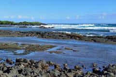 Whittington-Strandpark in der großen Insel von Hawaii Lizenzfreie Stockbilder