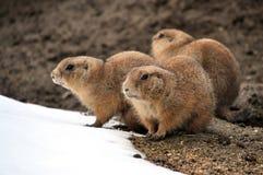 Whiz in winter. View of animals - whiz in winter Stock Photo