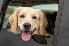 Who is that doggy in the window royalty free stock photos
