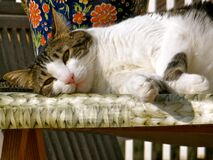 Who hasn't ever envied a cat's ability to relax? Stock Photography