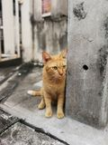 Who's coming. Orange street cat looking for someone Stock Photo