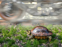 Who's faster. Railway track and train with running turtle. Travel technology concept Stock Images