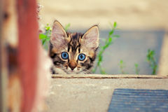 Who's there? Royalty Free Stock Photography