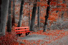 Who was just sitting on this bench?. Bloodred parkbench under the trees in a forest in Zurich. The area in front of the bench, where there are no leaves, is stock photos