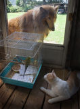 Who is watching who?. Dog want cat want bird Stock Image