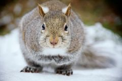 Who Are You?. A squirrel look like waiting somebody answer the questions Royalty Free Stock Photo