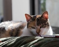 Whoever heeft kan een kat niet van eenzaamheid bang zijn royalty-vrije stock afbeeldingen