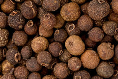 Whole Allspice (Pimenta dioica). Background texture of whole allspice Stock Images