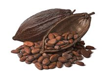 Free Whole And Half Cocoa Pod With Raw Beans Isolated On White Background Royalty Free Stock Photography - 151706327