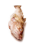 Whole Atlantic cod (Gadus morhua) fish, Isolated on a white stud Royalty Free Stock Image