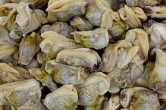 Whole Baby Clams up Close Royalty Free Stock Image