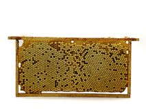 Whole bee comb with drone eggs, brood isolated on white background, front view royalty free stock photo
