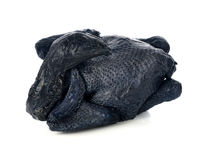 Whole Black Chicken, Silkie Royalty Free Stock Photo