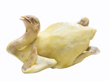 Whole body of Boiled Chicken Stock Photography