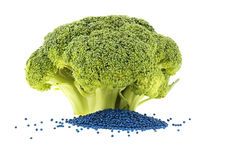 Whole broccoli floret and its seed stock photography