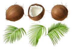 Whole and broken coco nut with green palm leaves. Coconut realistic vector illustration, whole and half cracked broken coco nut with green palm leaves, isolated royalty free illustration
