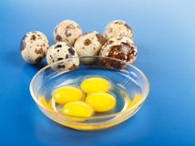 Whole and broken quail eggs Royalty Free Stock Image