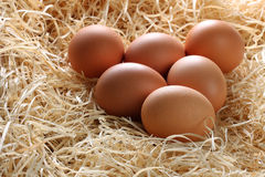Whole Brown Eggs in Straw Stock Image