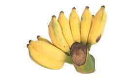 Whole bunch of semi riped yellow banana Stock Image