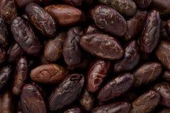 Whole Cacoa Nibs (Theobroma cacao) royalty free stock images