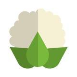 Whole cauliflower icon Stock Photography