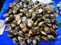 Whole clams in market Stock Image
