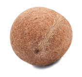 Whole coco without a shell Stock Photo