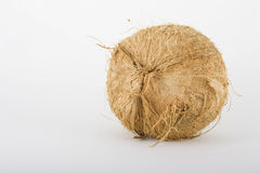 Whole Coconut Royalty Free Stock Photography