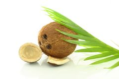 Whole Coconut with dry coconut Stock Photos