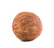 A whole coconut isolated over the bright background. Summer fruits for gourmets. Tasty natural ingredients. Vegetarian diets. Brown scratchy coconut with stock photos