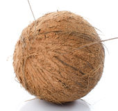 Whole coconut Royalty Free Stock Images