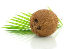 Whole Coconut with leaves Stock Images