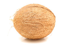 Whole coconut level Stock Photos
