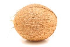 Whole coconut level Stock Photos