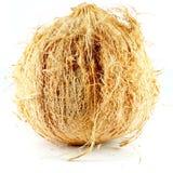Whole coconut. Stock Photo