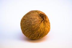 Whole_Coconut_onWhite stock afbeelding