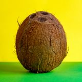 A whole coconut stands upright on a green and yellow background. Square frame for the use of advertising of tropical fruits or royalty free stock photo