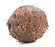 Whole coconut on the white Stock Images