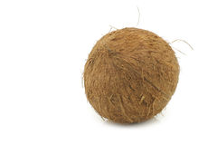 Whole coconut Stock Photography