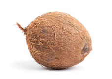 Whole coconut Royalty Free Stock Photos