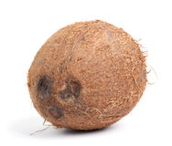 Whole coconut Stock Image