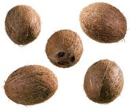 Whole coconuts Royalty Free Stock Photos