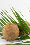 Whole coconuts on coconut leaves on white Royalty Free Stock Photo
