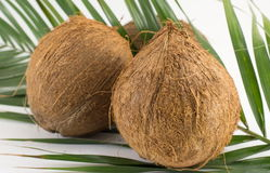 Whole coconuts on coconut leaves on white Stock Photography