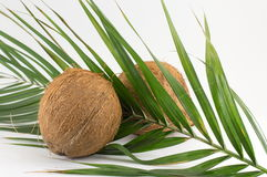Whole coconuts on coconut leaves on white Stock Image