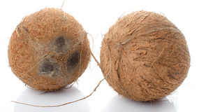 Whole coconuts Stock Photography