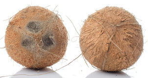 Whole coconuts Stock Images